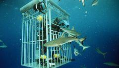 Na Havaji sílí hnutí za zrušení podmořských výletů za žraloky